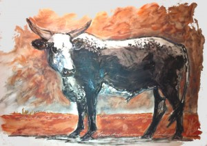 Bull in open landscape